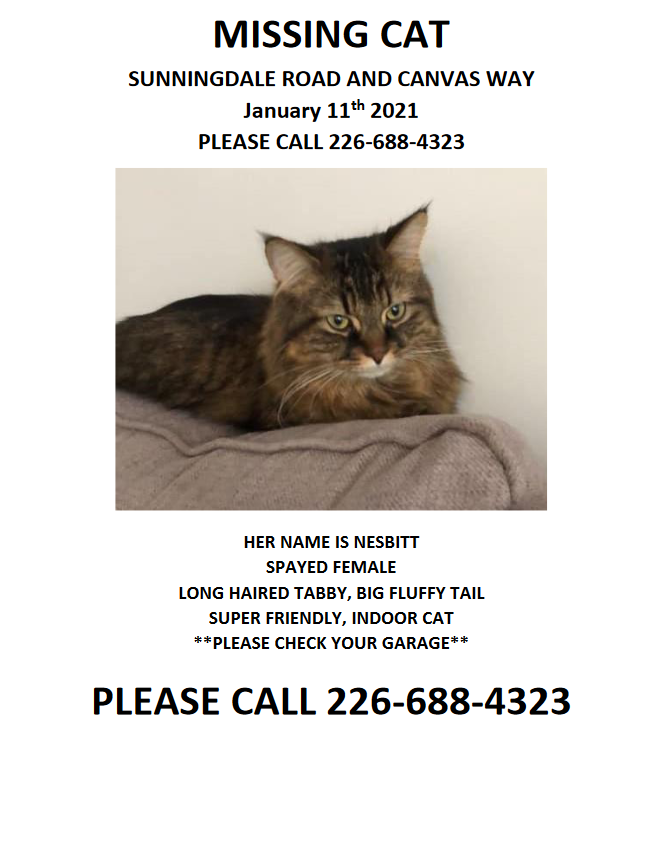 Nesbitt – Lost Female Cat – Brown Tabby Longhair