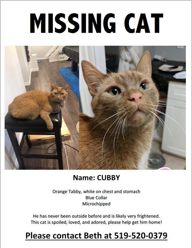 Cubby – Lost Male Cat – Orange Tabby Shorthair